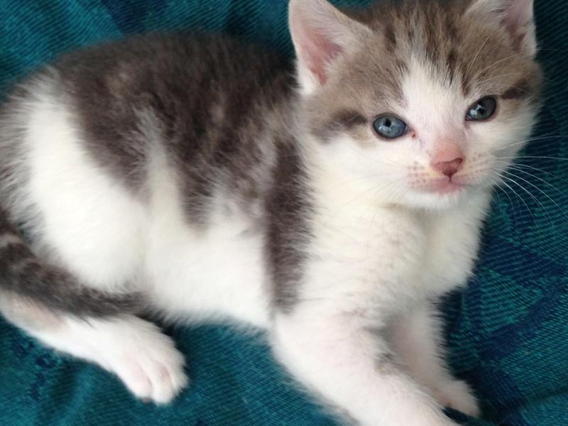 LILAS, bébé de ZOE , née le 29 mars 2017 Lilas310