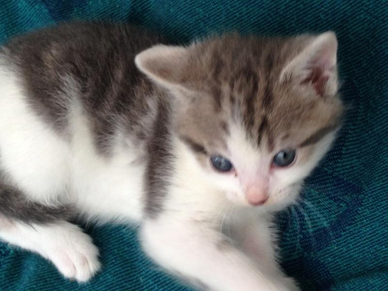 LILAS, bébé de ZOE , née le 29 mars 2017 Lilas410