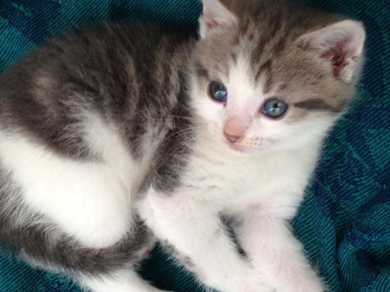 LILAS, bébé de ZOE , née le 29 mars 2017 Lilas510