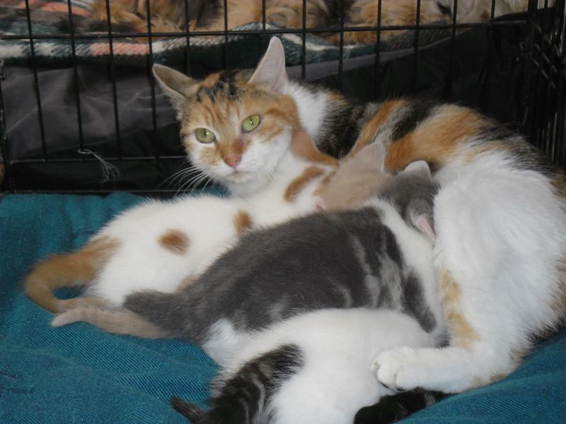 Maman ZOEE et ses 4 bébés (SOS n°3 Pascaline Divion). Sam_1919