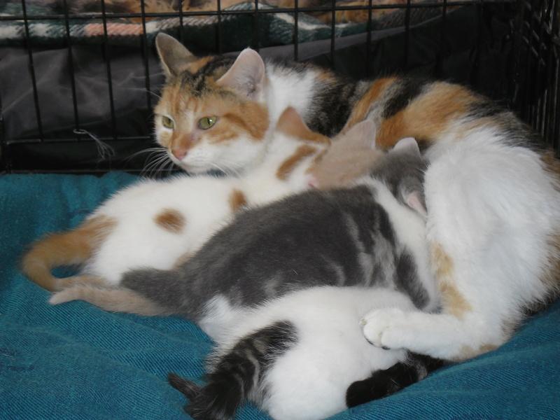 Maman ZOEE et ses 4 bébés (SOS n°3 Pascaline Divion). Sam_1921