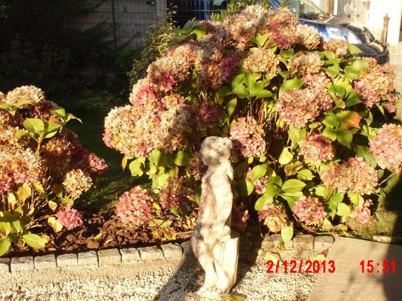 Bon Lundi Jardin11