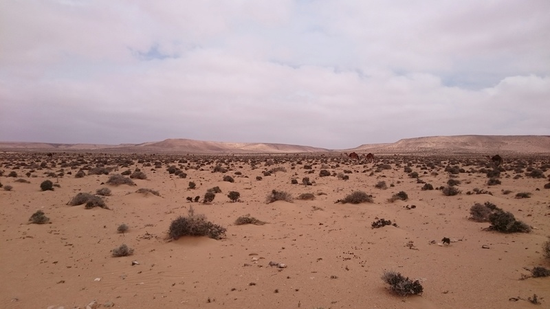CR Maroc en Mai - JL, JM,Rodo, Speedy. - Page 2 Dsc_0137