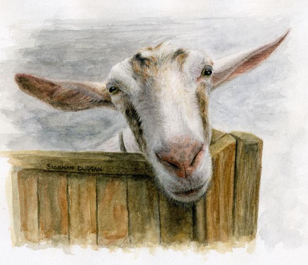 Les animaux peints à l'AQUARELLE - Page 5 Allear10