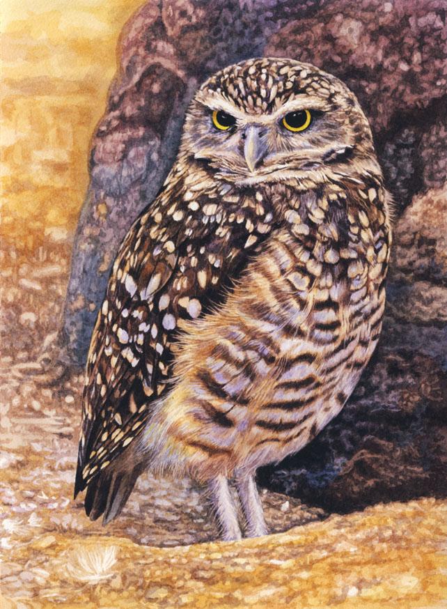 Les animaux peints à l'AQUARELLE - Page 6 Burrow10