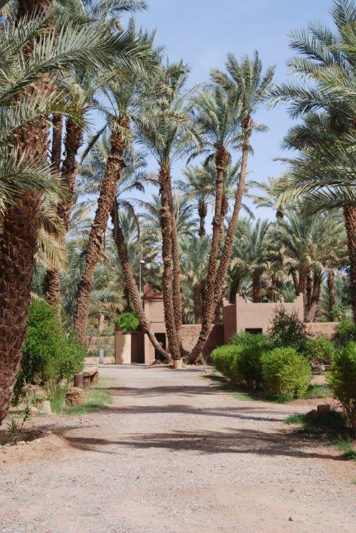 [Maroc Camp/Découverte] nouveau camping a zagora amezrou Dsc_5411
