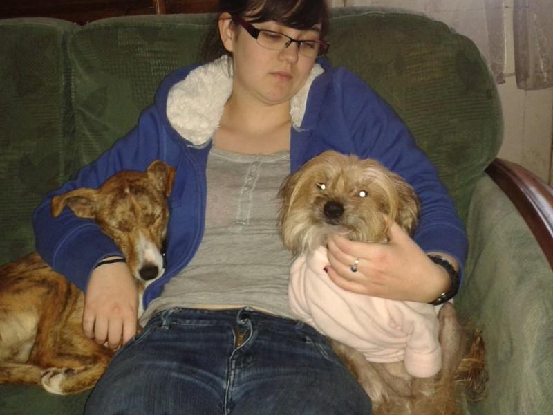 "Whippet mix à l'adoption ""Maria"" Scooby France Adoptée - Page 3 Maya210"