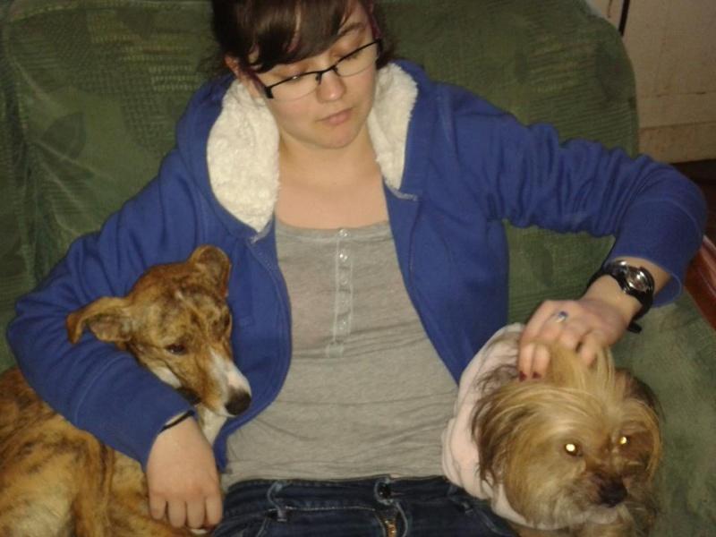 "Whippet mix à l'adoption ""Maria"" Scooby France Adoptée - Page 3 Maya311"