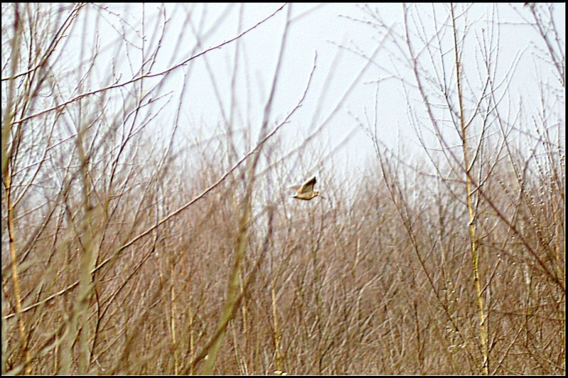 Les oiselles du marais - Page 5 1070