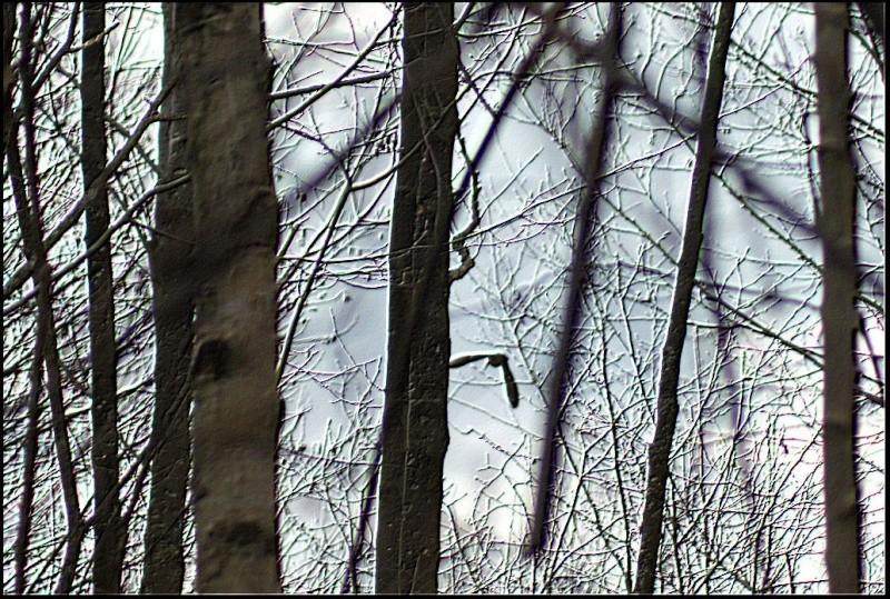 Les oiselles du marais - Page 5 579