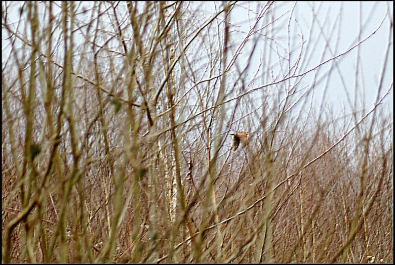 Les oiselles du marais - Page 5 977