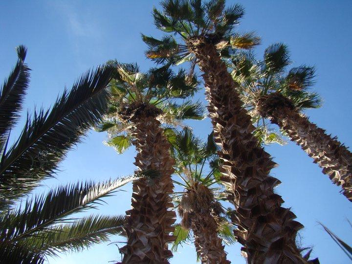 [Maroc Camp/Dernières nouvelles] Jardins de la Koudya 15003912