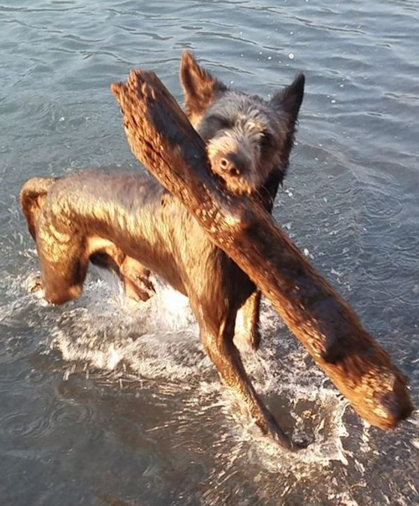 Dogs in the water 2111