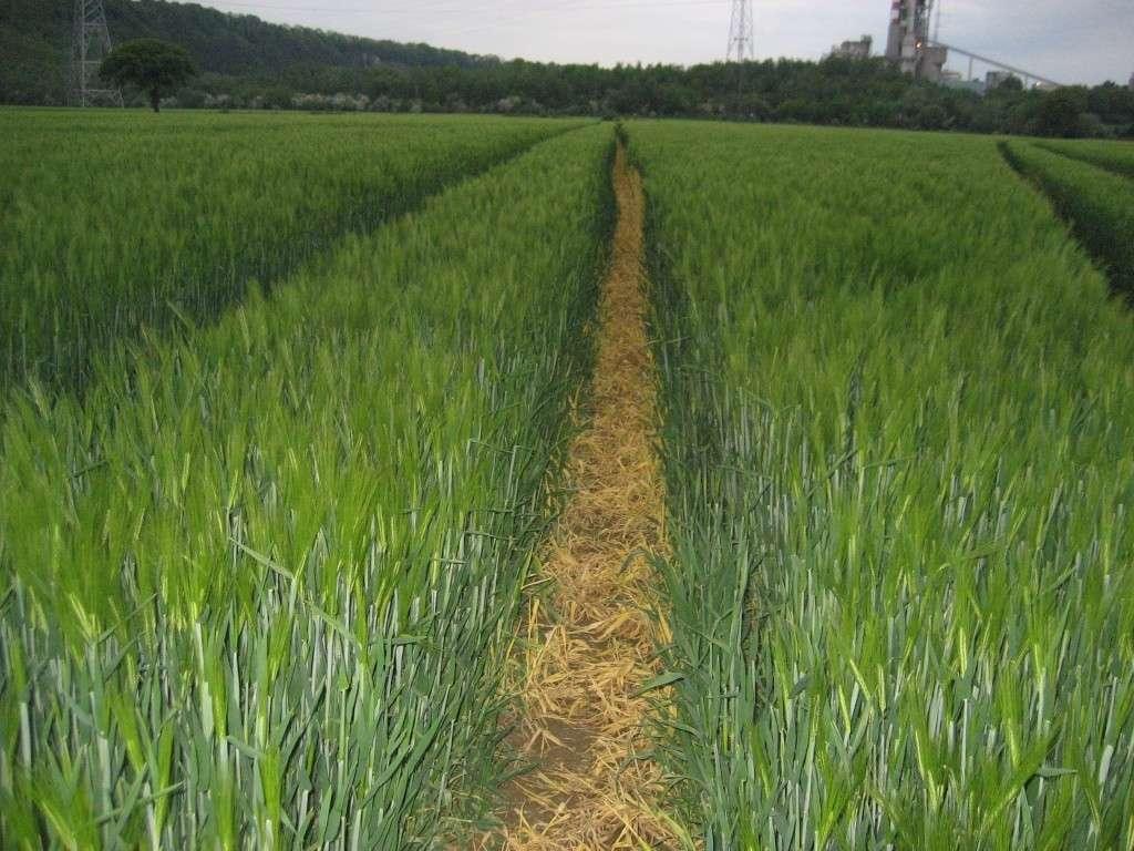 grain vert dans traces de pulvé : solution Img_2334