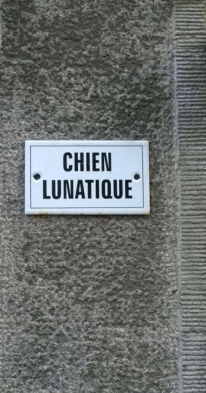 """Photos : """"insolite"""" ou """"n'importe quoi"""" ... hors Bretagne - Page 2 Chien_10"""