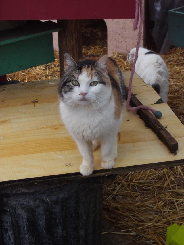 Lili - Tricolore, née en 2009 Pict1224
