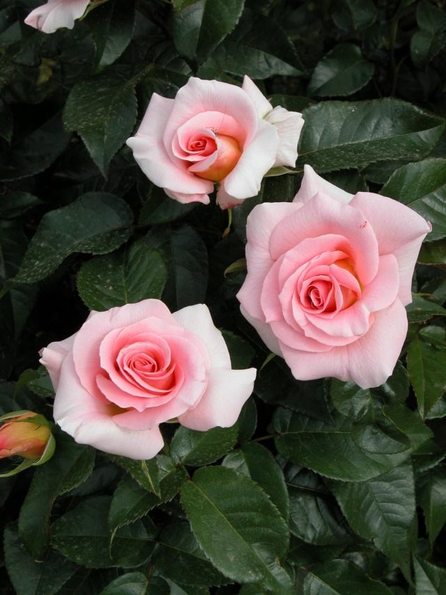 ART DU JARDIN jardins d'exception, fleurs d'exception 1_1_1170