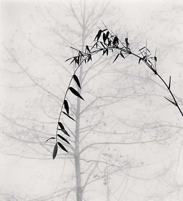 ART PHOTOGRAPHIQUE 1_1_1604