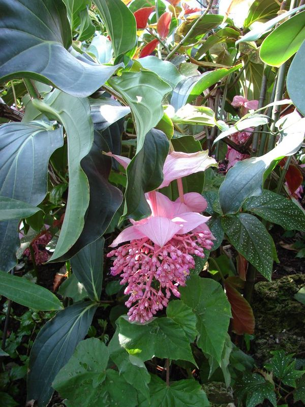 ART DU JARDIN jardins d'exception, fleurs d'exception - Page 2 1_1_1983
