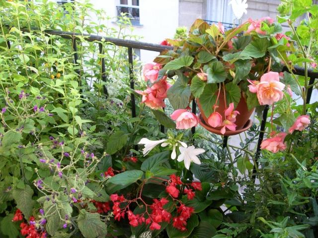 ART DU JARDIN jardins d'exception, fleurs d'exception 1_1_1_98