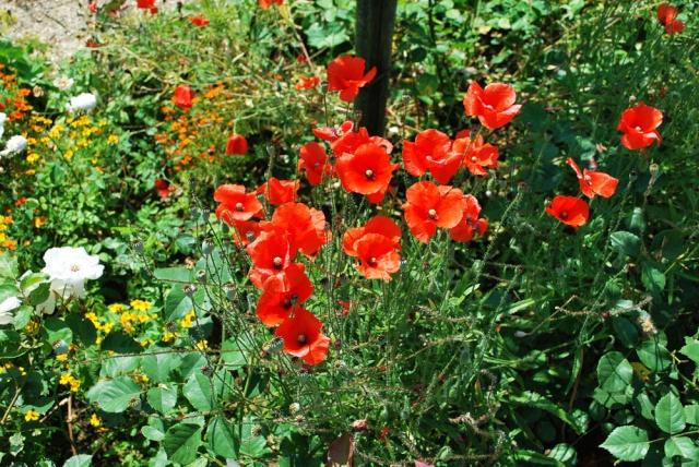 ART DU JARDIN jardins d'exception, fleurs d'exception - Page 2 1_1_2565
