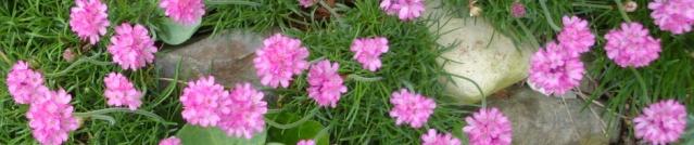 Marabout des noms géographiques - Page 4 Fleurs10