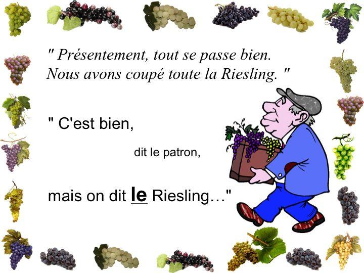 Les vendanges eb Alsace 210
