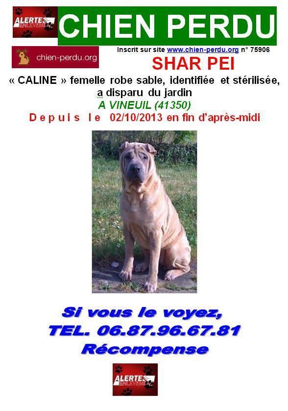Caline perdue dans le 41 14883210