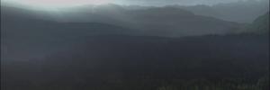 Bosque infinito