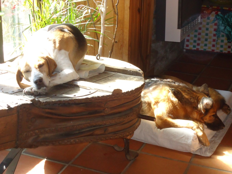 Patoche, Délice, Foxy...(et Béky) Dsc00815