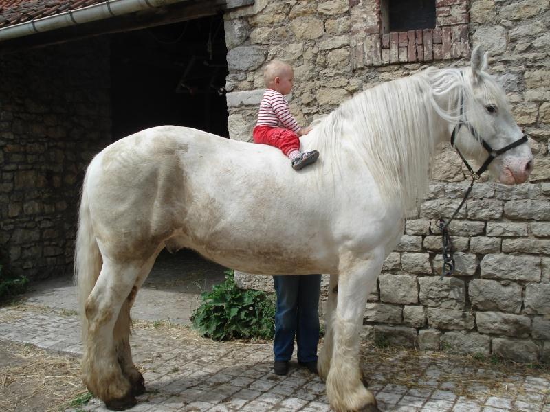 Thème de décembre : les chevaux et les enfants - Page 2 Dsc02010