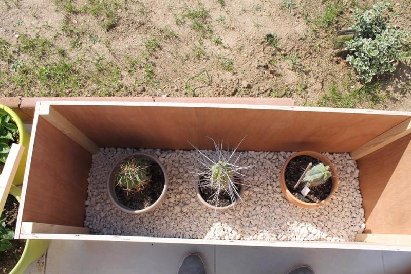 Mon coffre a cactus! 10277110