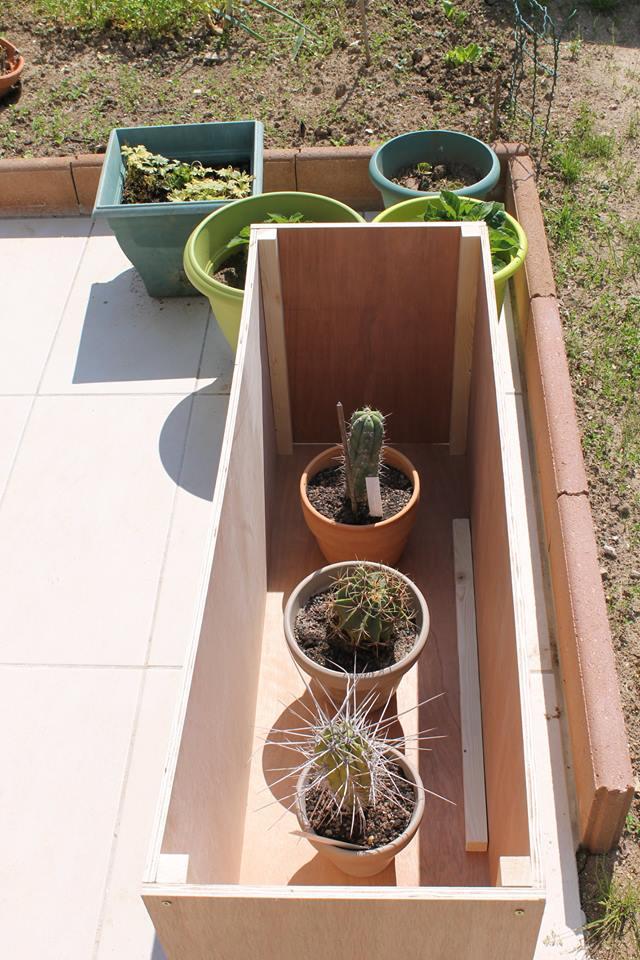 Mon coffre a cactus! 10297510