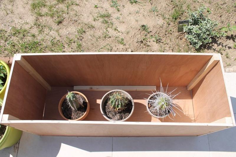 Mon coffre a cactus! 10390110