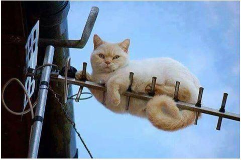 Les bêtises des chats Chat_t10