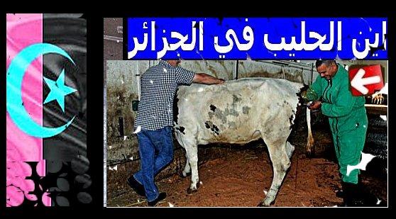 Yabiladi.news Algeri10