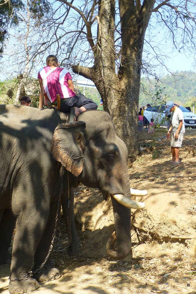 fête des éléphants P1130910