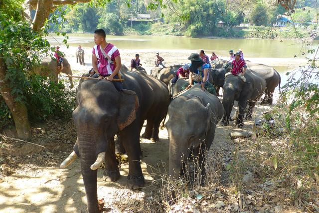 fête des éléphants P1130913