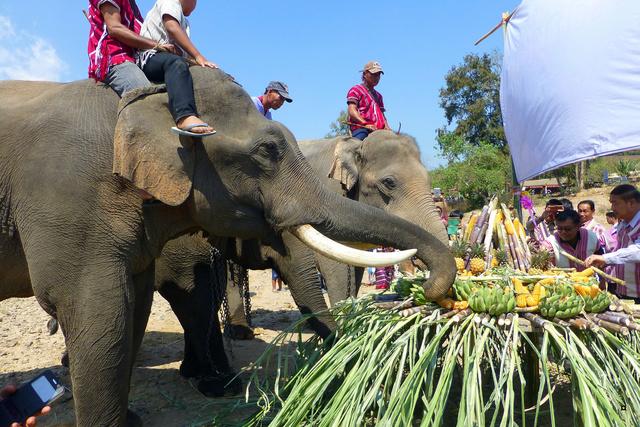 fête des éléphants P1130922