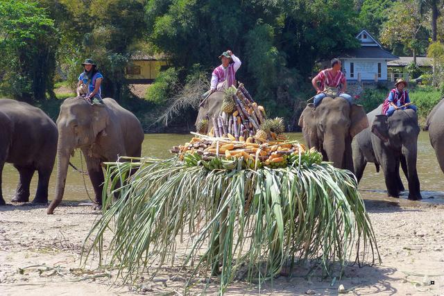 fête des éléphants P1130923