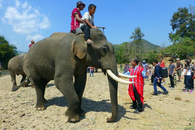 fête des éléphants P1130924