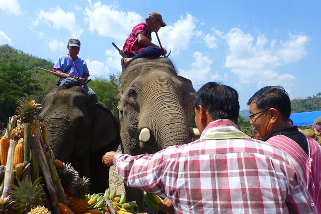 fête des éléphants P1130925