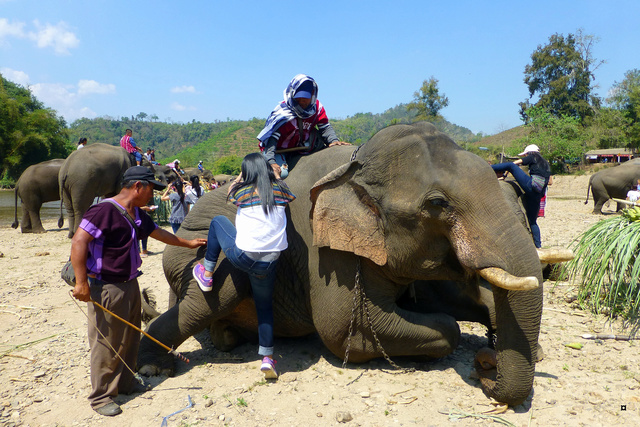 fête des éléphants P1130927