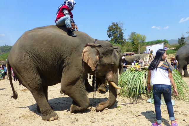 fête des éléphants P1130928