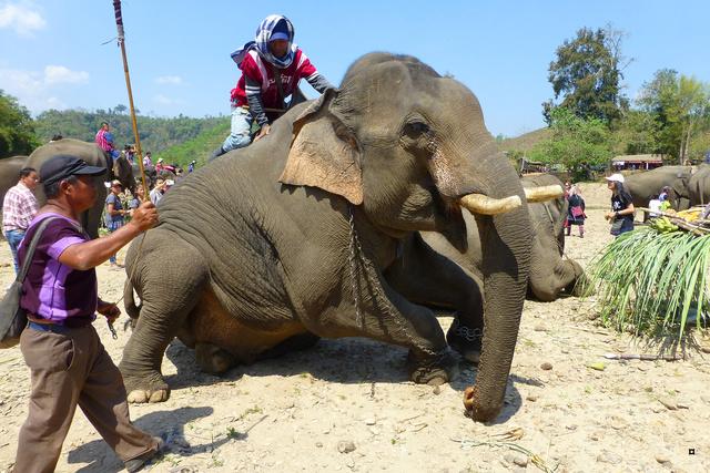 fête des éléphants P1130929