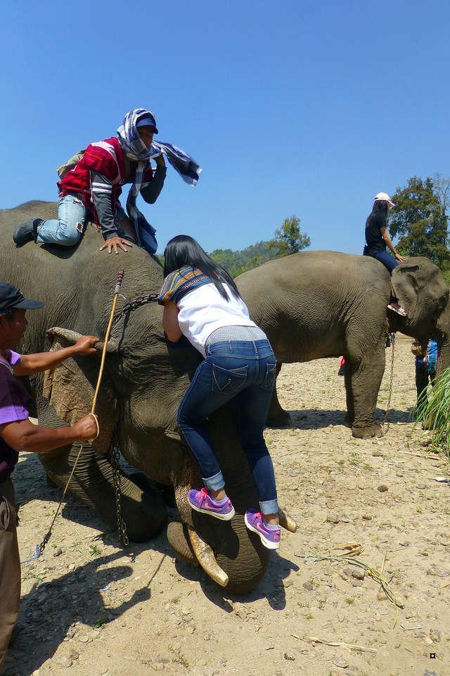 fête des éléphants P1130930