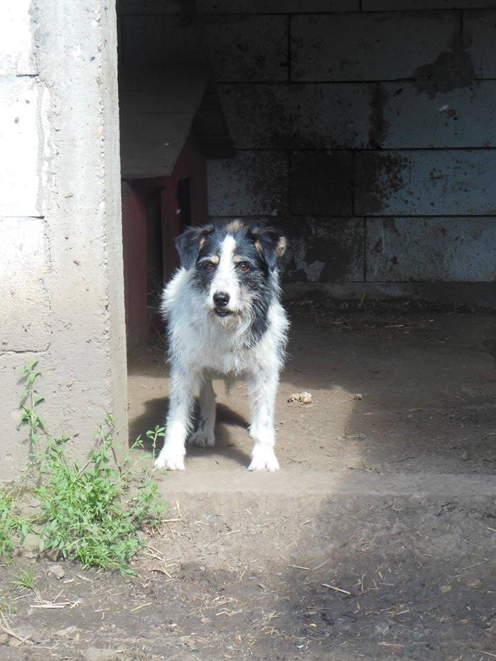 MACUMBA - griffon 8 ans  (4 ans de refuge) -Asso Arche d'Eternité (Roumanie) 19366012