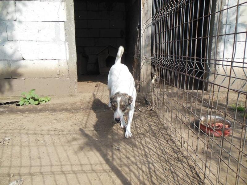 IRIS, née en 2015 - sauvée de la rue - Parrainée par Perdita -  OANA -SC-R-SOS- 19366112