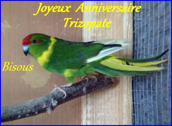 Joyeux Anniversaire Trizopate ! 10-tri10