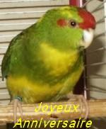 Bon Anniversaire, Claude (kiwi) 2-99_a10